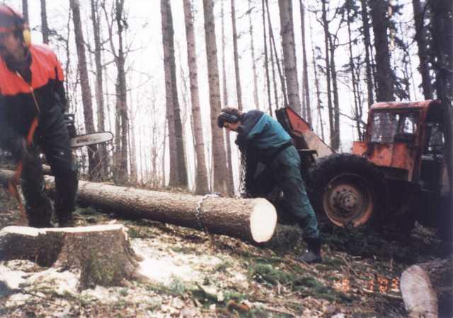 stromy2